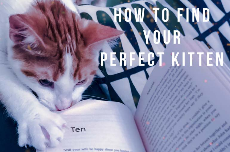 How to find a kitten, shelter kitten